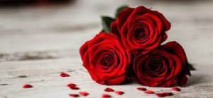 roses-rouges-300x139